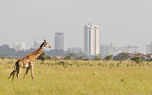 Giraffe with city in background.